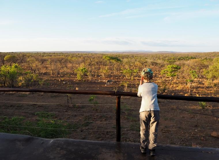 Bild på en barn som spanar ut över ett vattenhål på savannen.