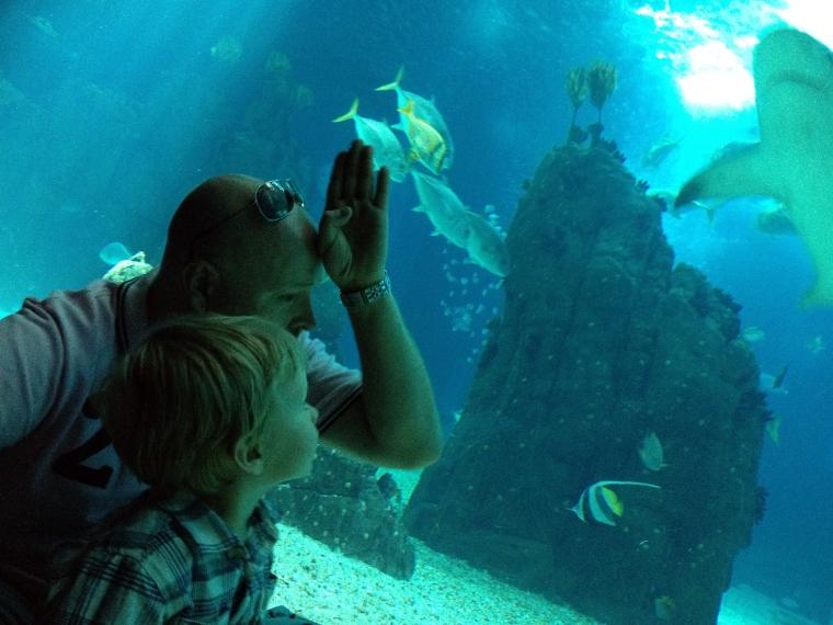 En man och ett barn som tittar på fiskar.
