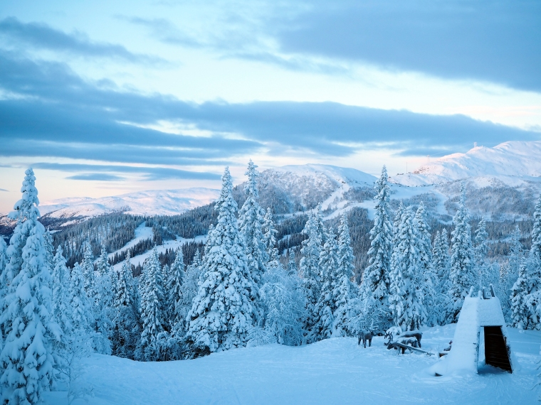 Trärenar med berg bakgrunden.