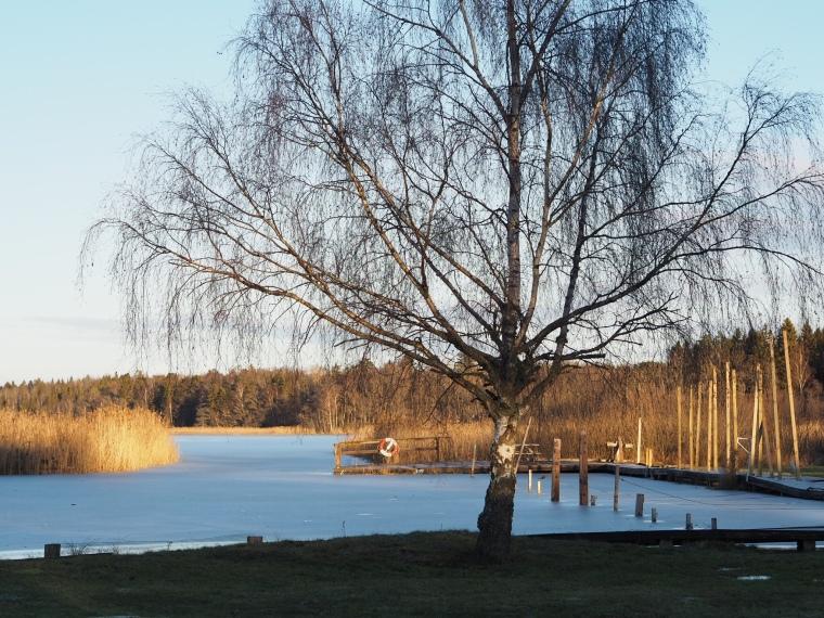 Vatten, brygga och ett träd i solen.