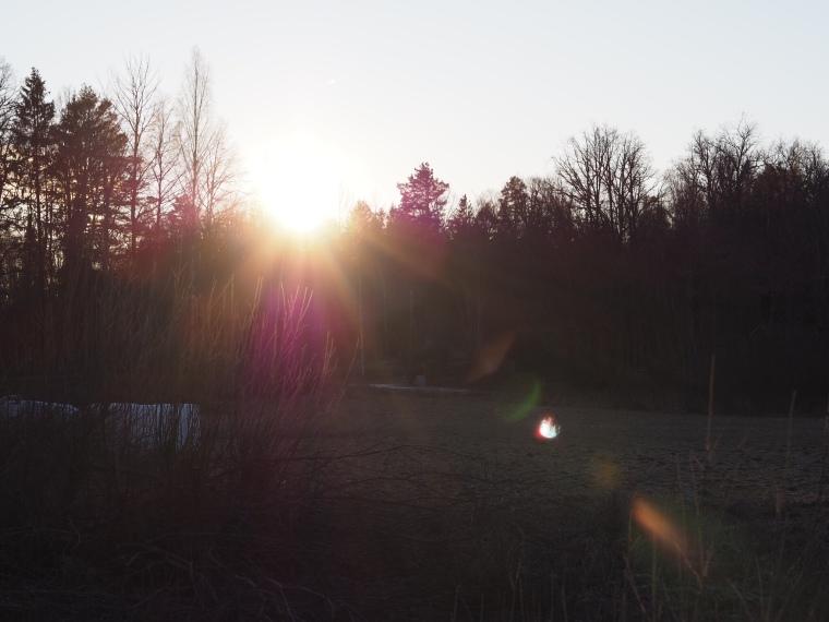 Motljus med solreflexer över en äng.