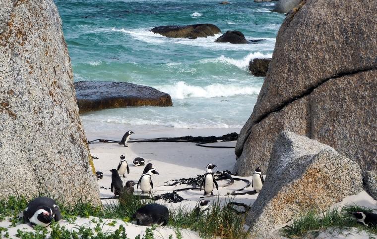 Några pingviner på stranden. Bilden tagen mellan två klippblock. Havet i bakgrunden.