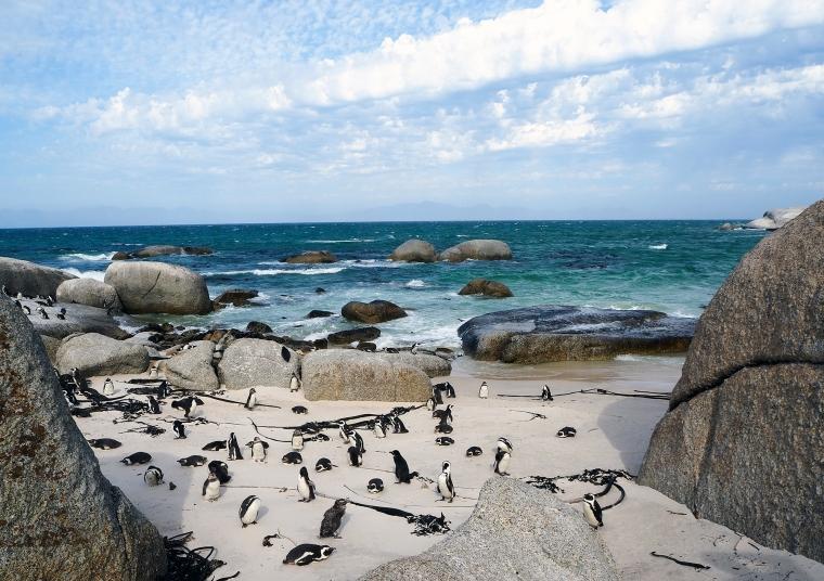 Pingviner på strand med havet i bakgrunden.