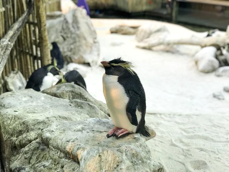 Pingviner.