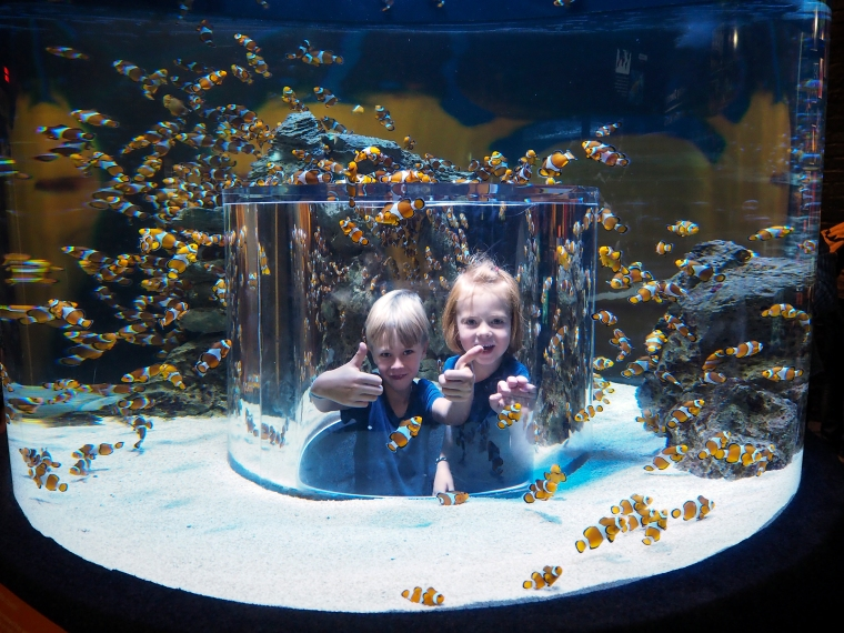 Två barn som sticker upp huvudena i en utkikstub i ett akvarium.