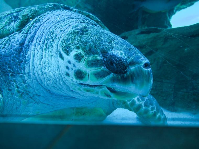 Närbild på en sköldpadda.
