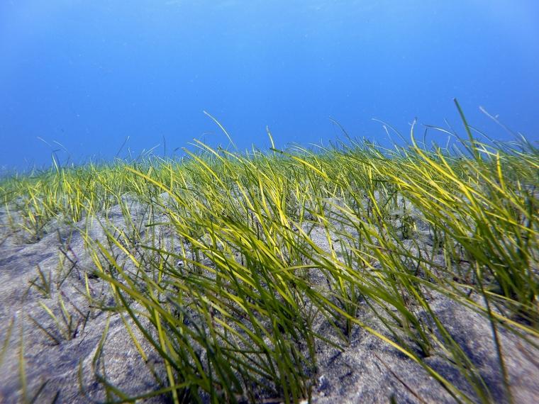 Sandbotten med sjögräs och klarblått hav.