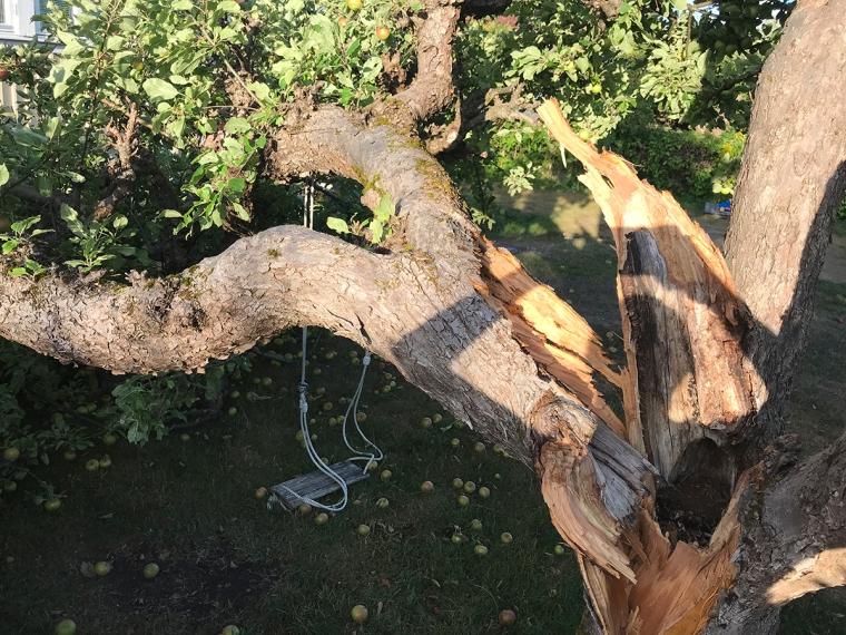 Ett träd som är knäckt på mitten och en gunga som hamnat på marken under.