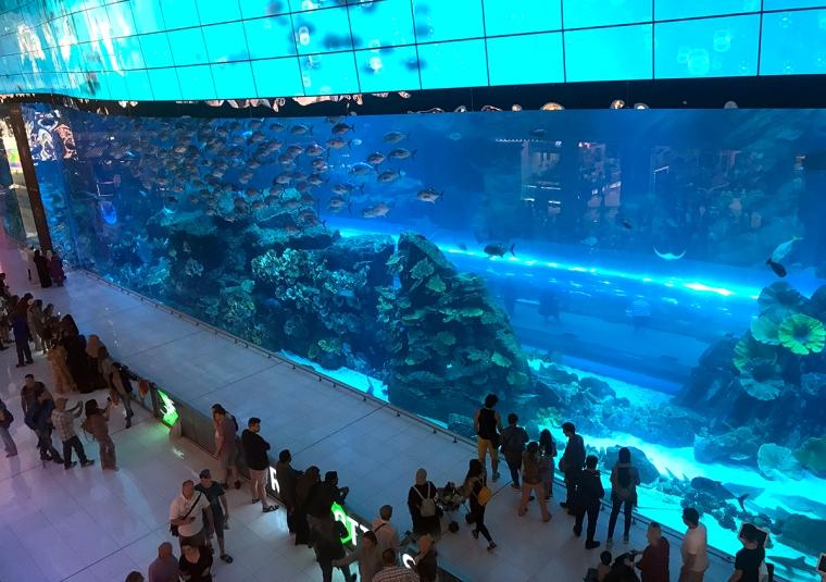 En hel glasvägg in i ett akvarium fullt med fiskar och koraller.