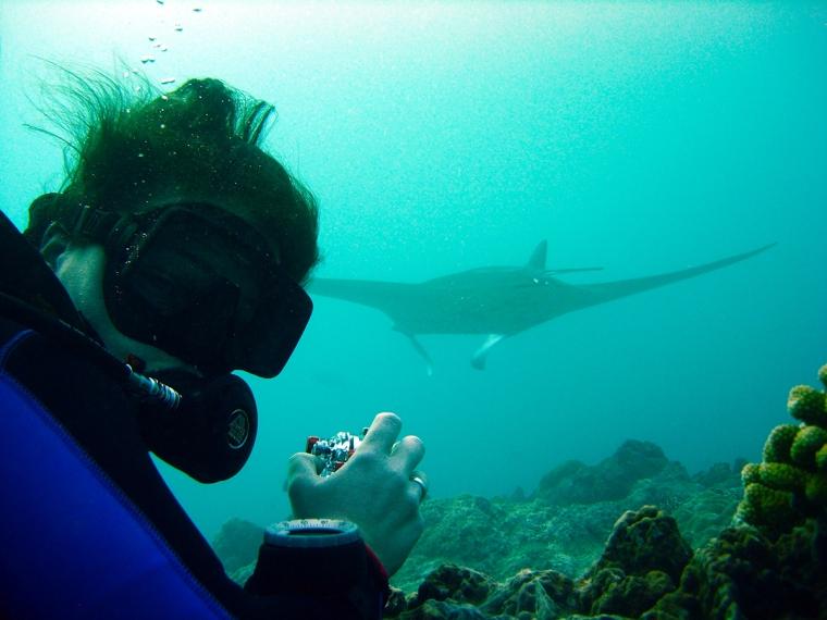 En dykare med kamera i förgrunden och en manta i bakgrunden.