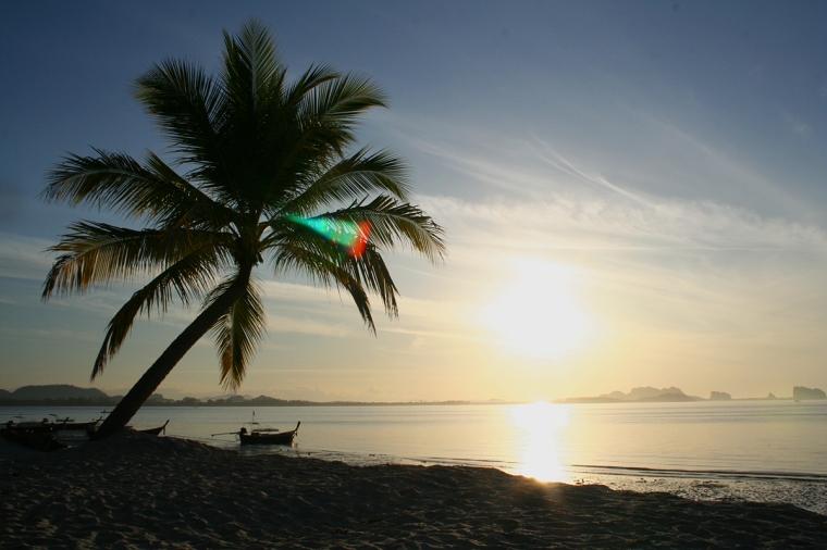 Solnedgång i havet, sandstrand och en palm i motljus.