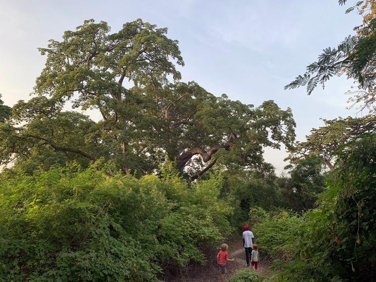 En stig med höga träd. En man och två barn på stigen.