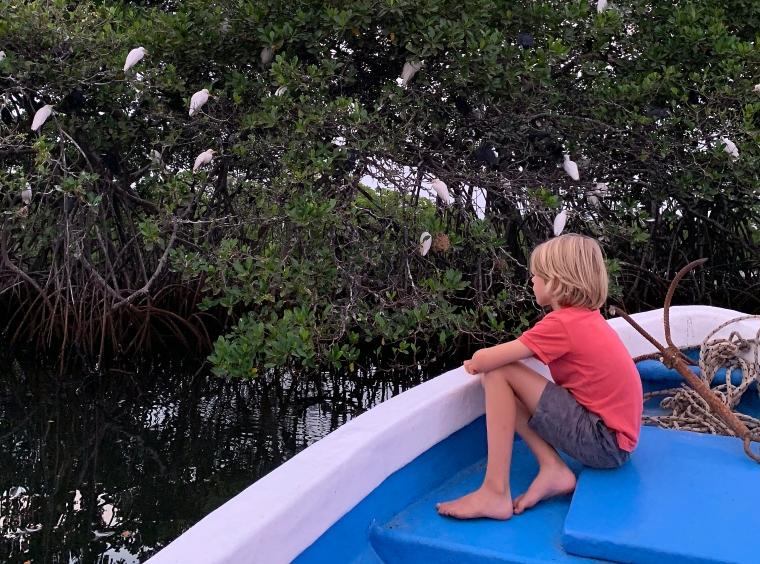 Ett barn sitter i fören på en båt och tittar på ett träd med fåglar.