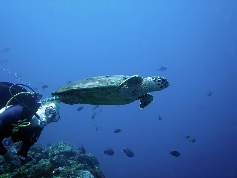 En dykare och en skjöldpadda.