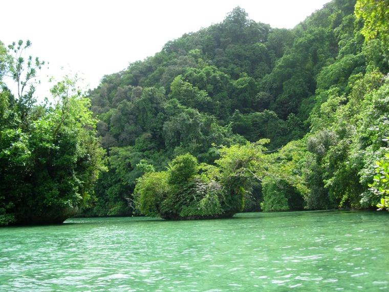 Grönt vatten och grön växtlighet.