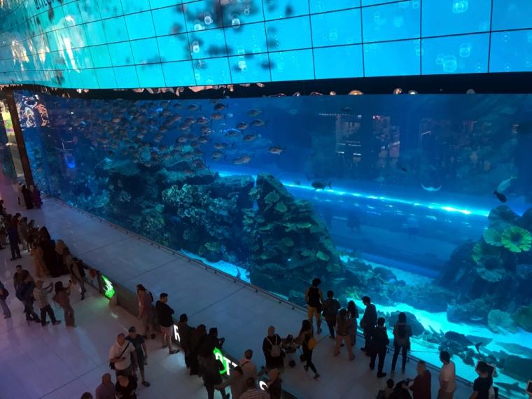 En gigantisk vägg som utgör ett akvarium.
