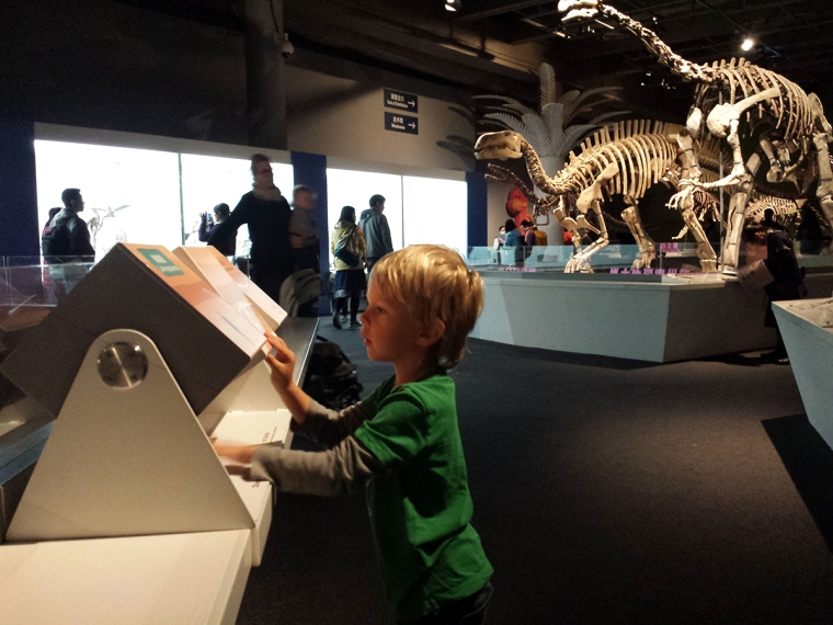 Ett barn i förgrunden och dinosauriesklett i bakgrunden.