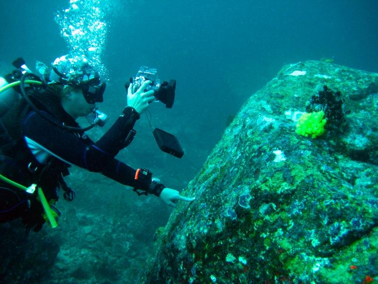 En dykare som tar kort på en feader star.