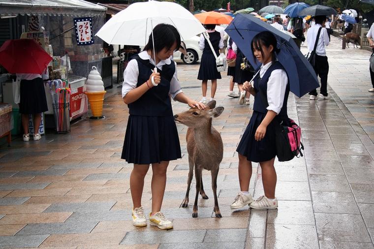 Två flickor klappar en hjort.