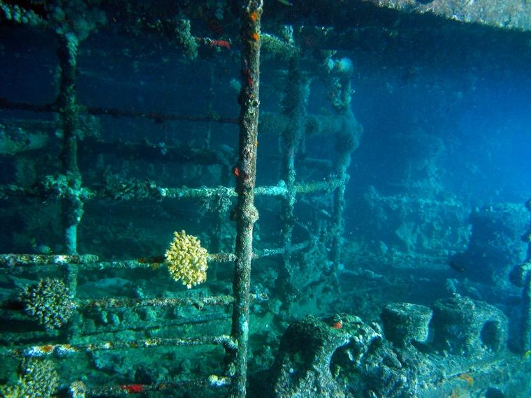 Vrak täckt av koraller.