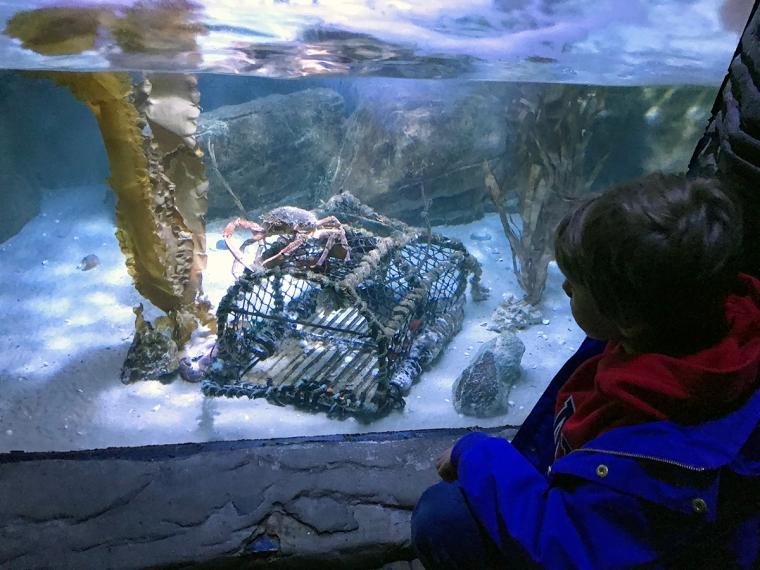 Ett barns om tittar på en krabba i ett akvarium.