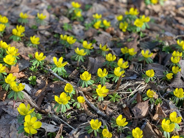 Närbild på gula blommor.