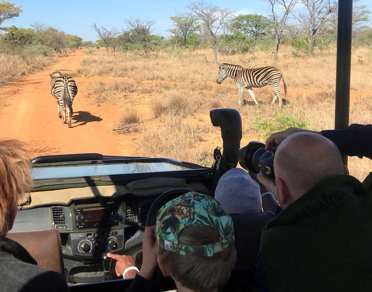 Personer sitter i en safaribil och tar kort på zebror.