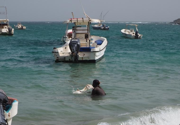 En man står i havet och skrubbar en vit get.