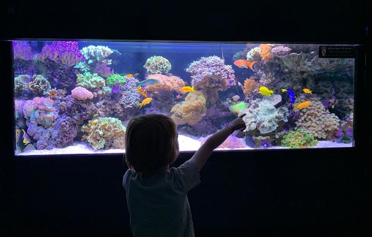 Ett barn står och tittar in i ett akvarium.