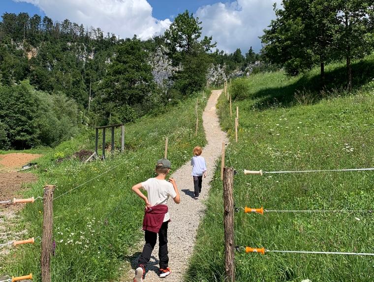 Två barn som går på en stig i en hage.
