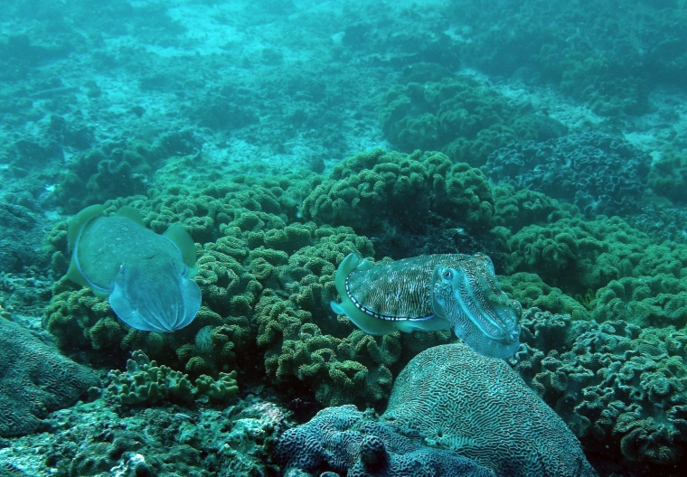 Två bläckfiskdjur som smälter in i bakgrunden med färg och struktur.