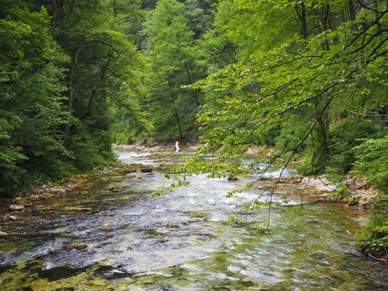 Ett vattendrag med gröna väåxtlighet runt.