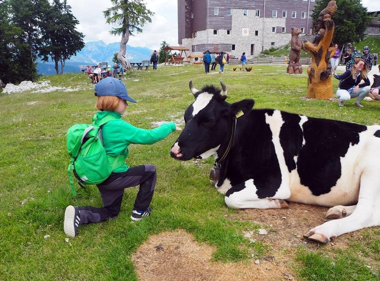 Ett barn klappar en svar och vit ko.