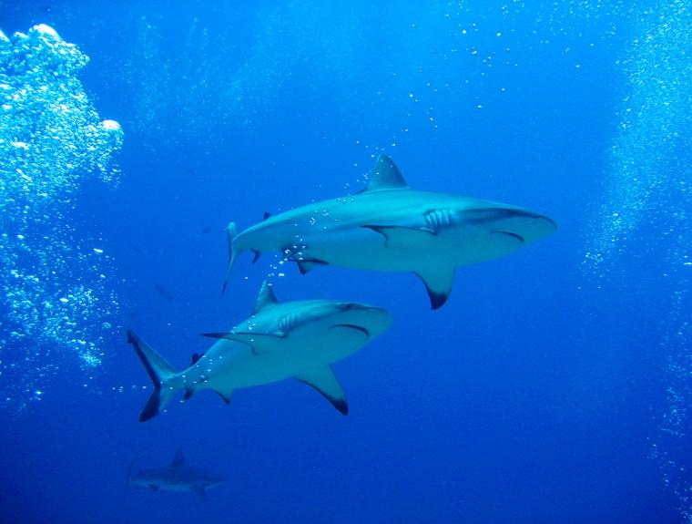 Två harjar i blått hav.