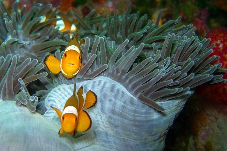 Dykning_Thailand_dec2006_5