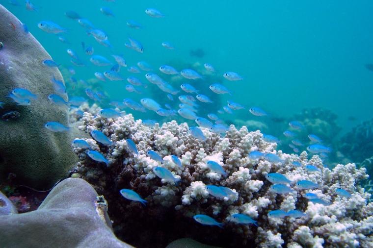 Dykning_Thailand_dec2006_7