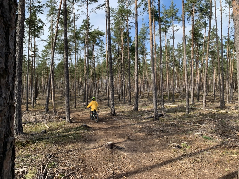 Ett barn cyklar i skogen bland tallar.