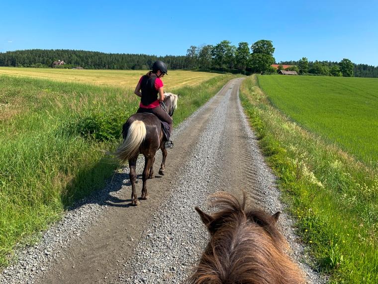 Två hästar på en grusväg.