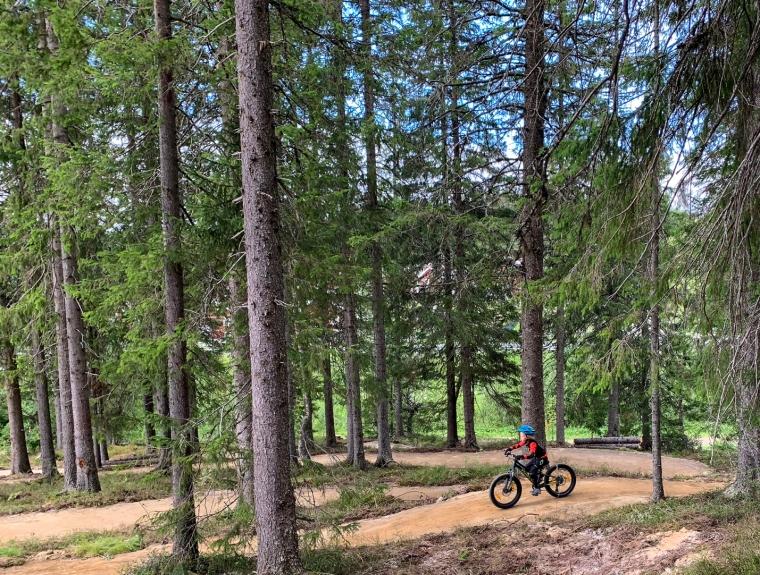 Ett barn cyklar i på enserpentinstig i skogen.