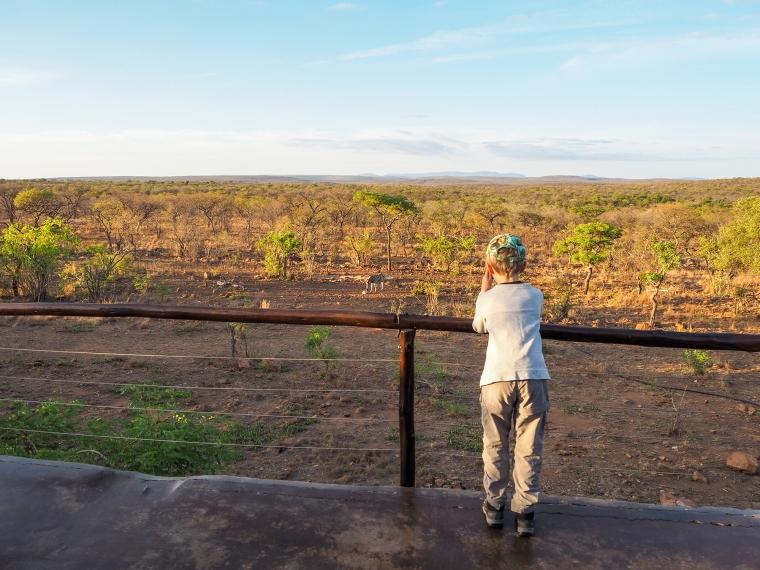 Ett barn står och tittar på en zebra vid ett vattenhål.