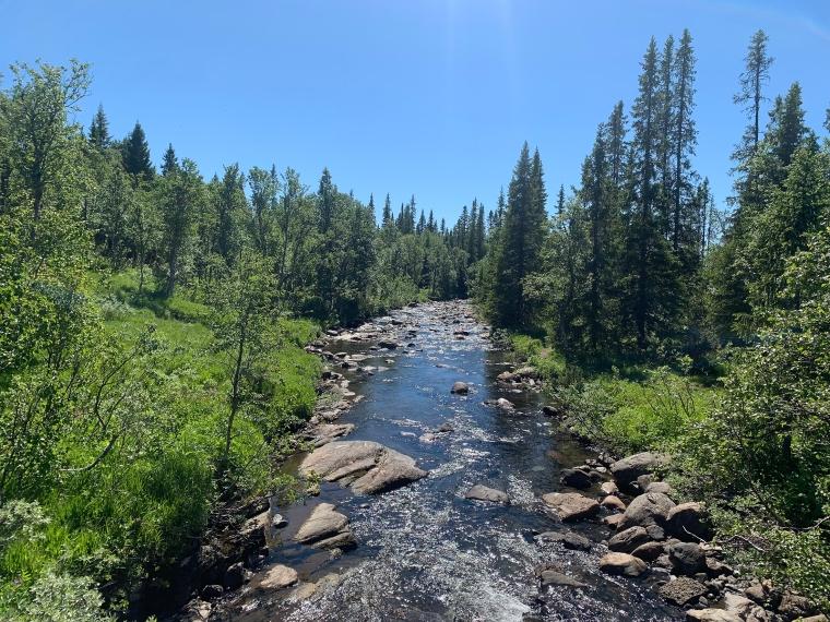 En å som flyter i skogen med stenar i.